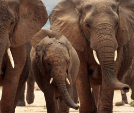 Tour La Pista degli Elefanti