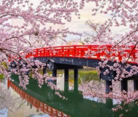Tour Sakura Zensen